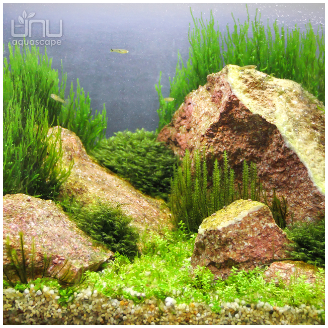acvariu-AN_1_i_652x652