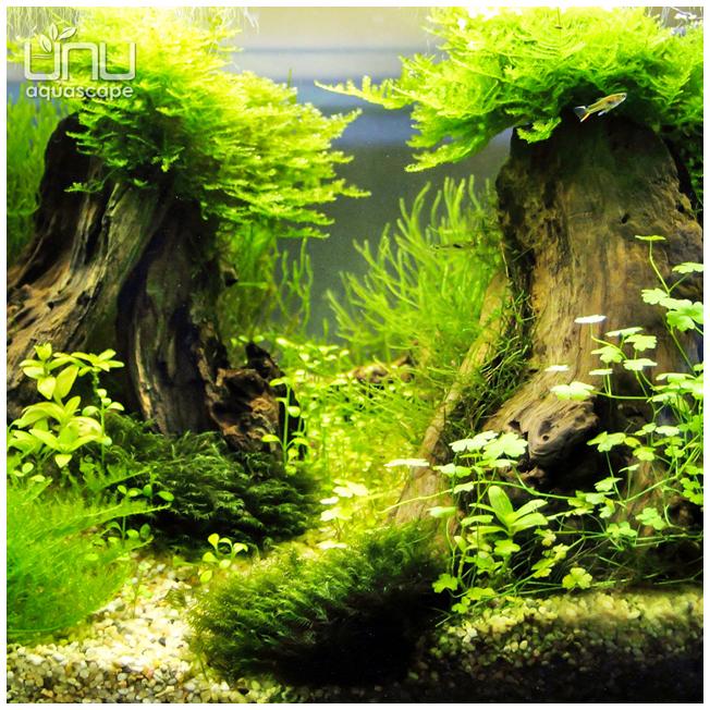 acvariu-AN_9_i_652x652